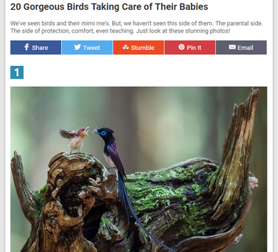 20-gorgeous-birds-taking-care-of-their-babies.png