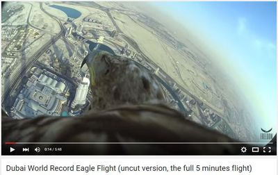 Dubai World Record Eagle Flight.jpg