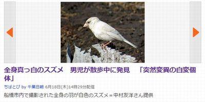 white_sparrow.jpg